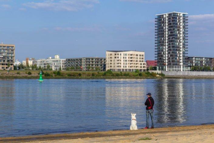 Hund am Strand im Weseruferpark