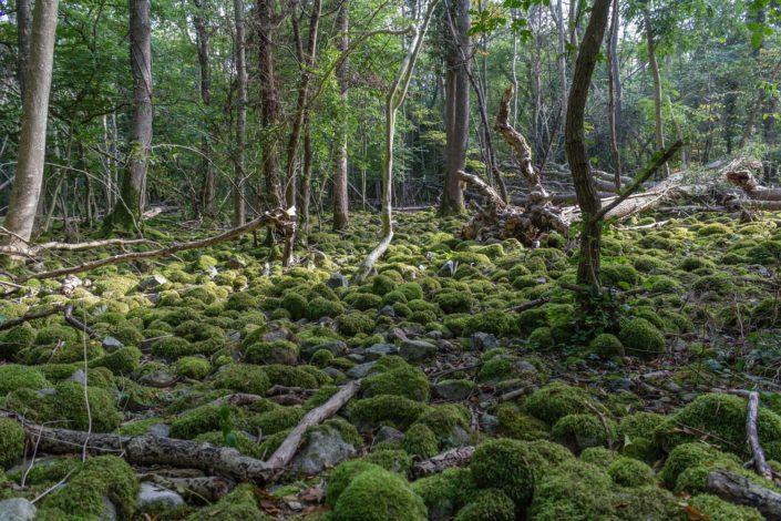 Sümpfe im Nationalpark Stenshuvud