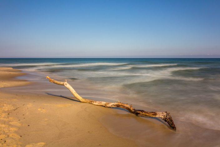 Baumstumpf am Strand im Nationalpark Stenshuvud