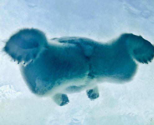 Der Polarbär