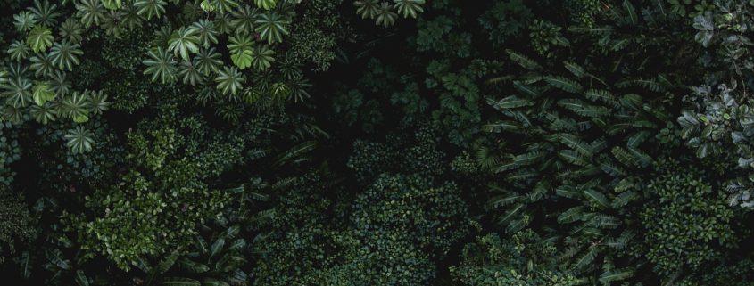 Der Regenwald