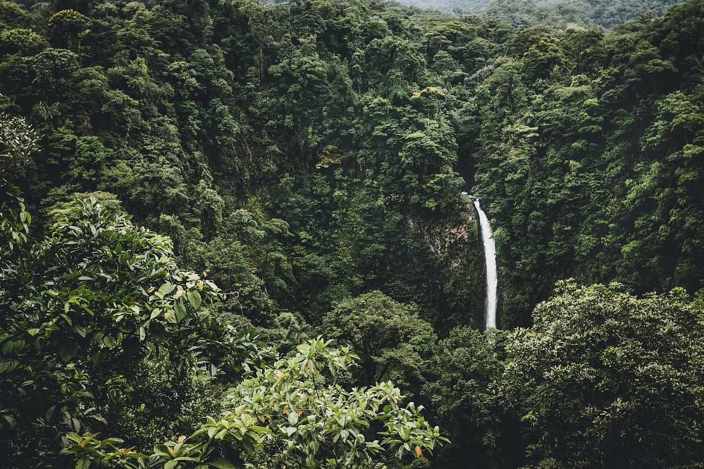 Regenwälder