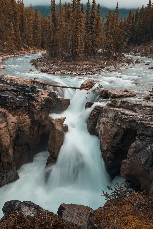 Sunwapta Falls - Icefields Parkway
