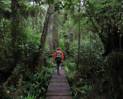 Kanada Regenwald