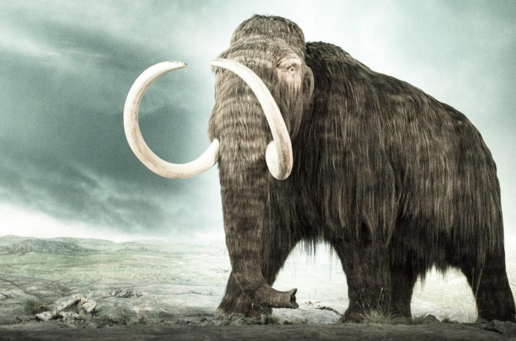 Royal BC Museum Mammoth