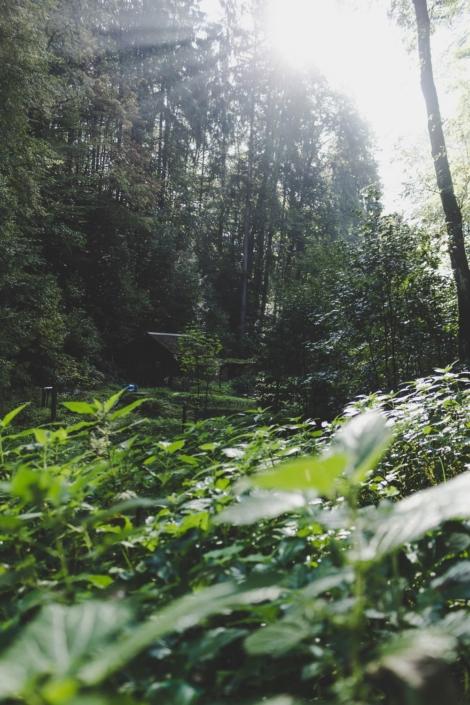 Wanderung im Amselgrund