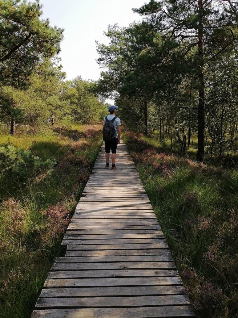 Wanderung im Pietzmoor