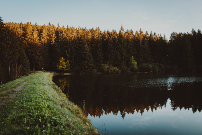 Auerhahn Teich morgens im Harz