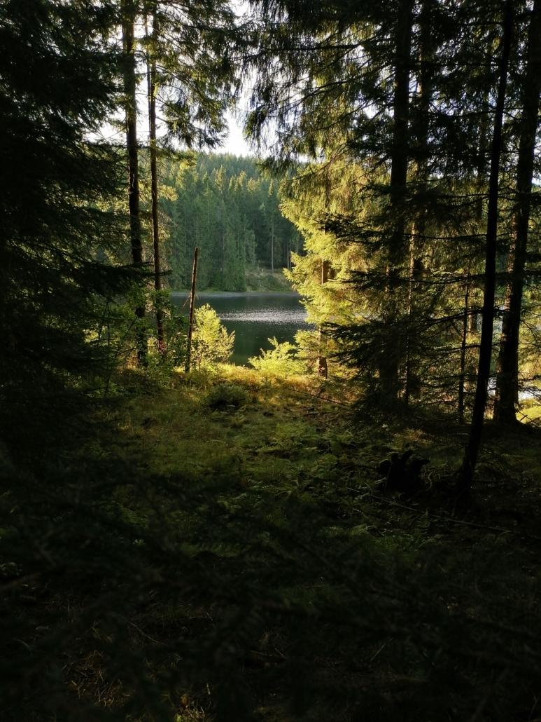 Waldblick auf den neuen Grumbacher Teich