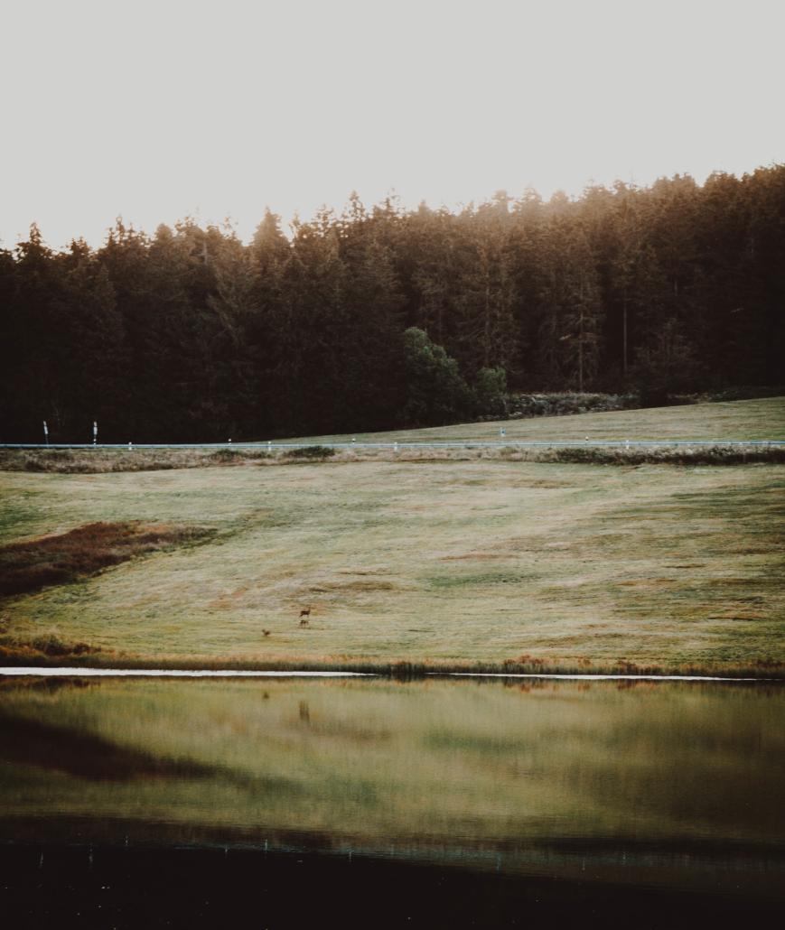 Auerhahn Teich früh am Morgen