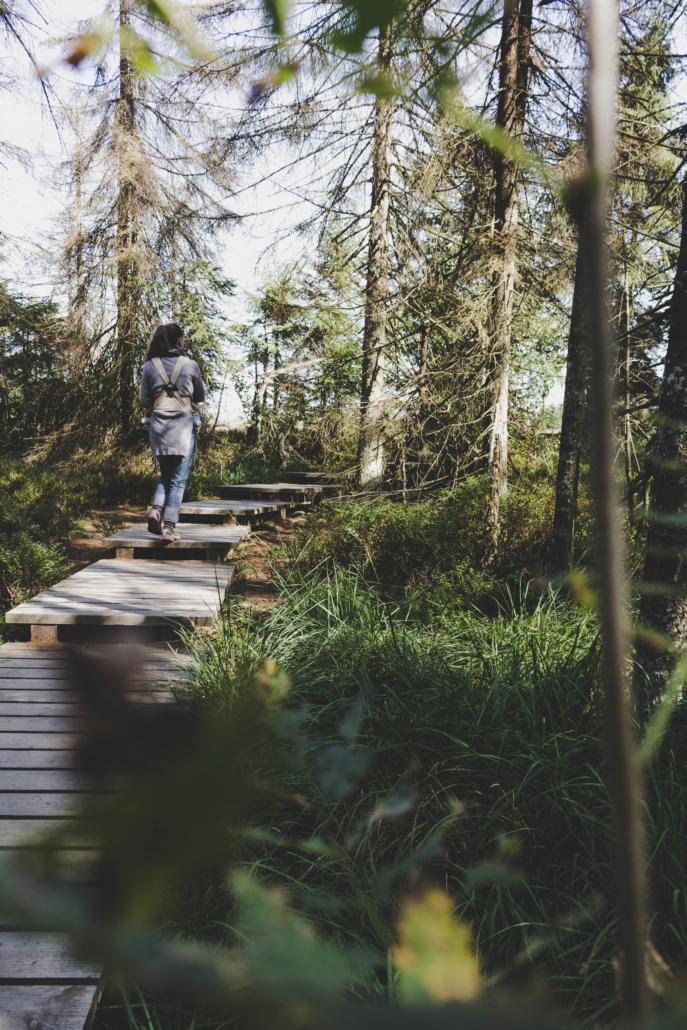 Unterwegs im Torfhausmoor auf dem Holzsteg