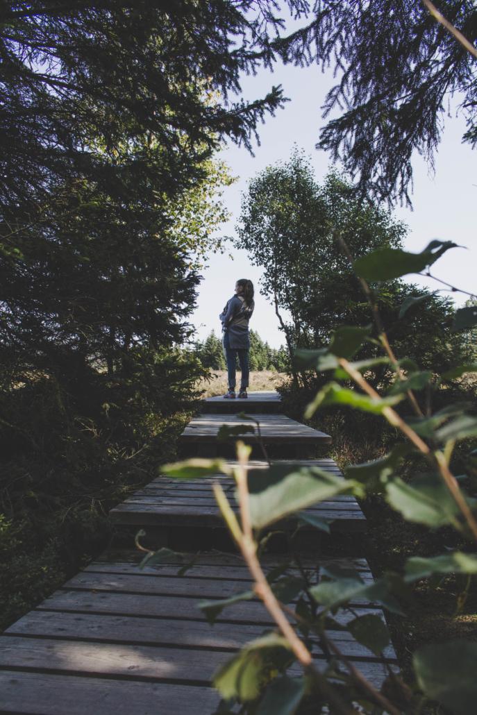 Blick in das Torfhausmoor vom Holzsteg