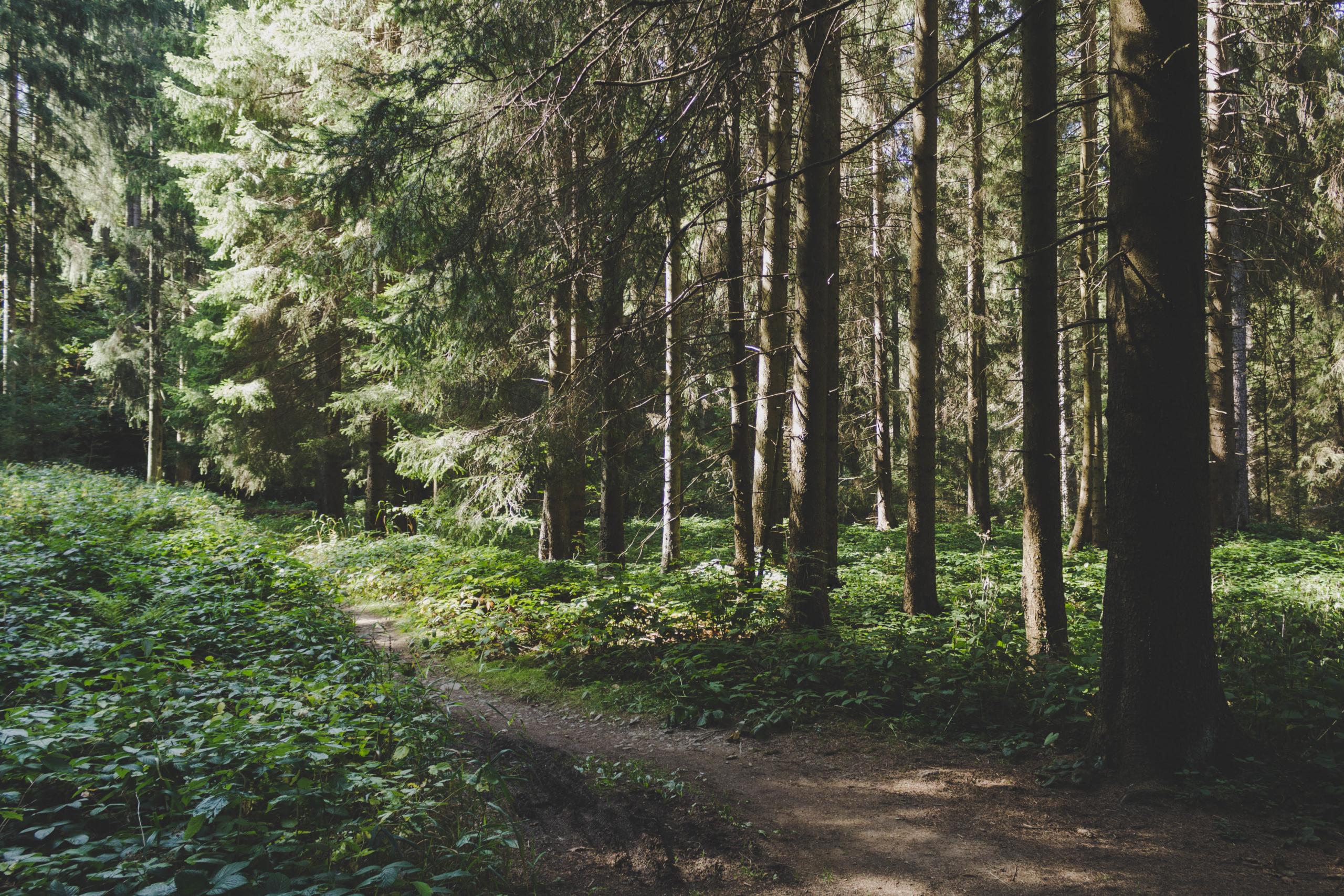 Rundwanderung im Wald nahe Goslar im Harz
