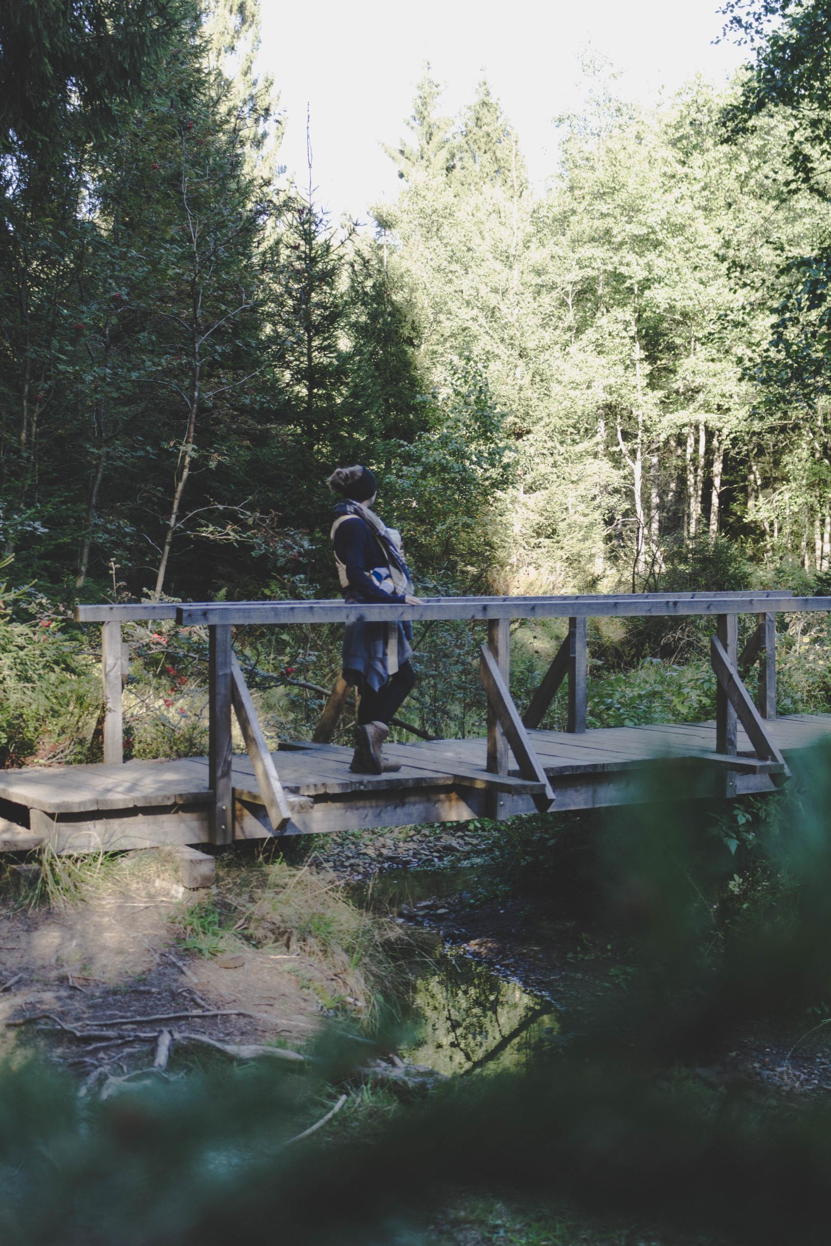 Brücke im Wald im Harz